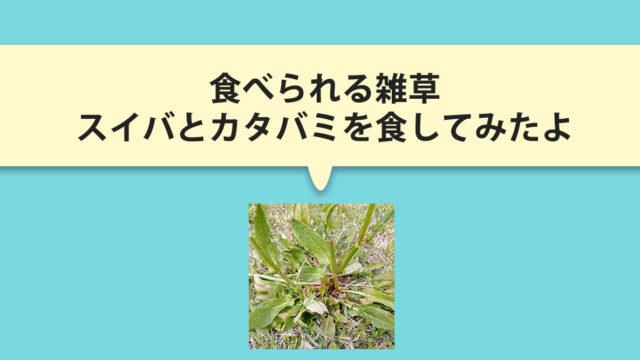 超金欠さんにお得な情報!食べられる雑草2種を紹介。